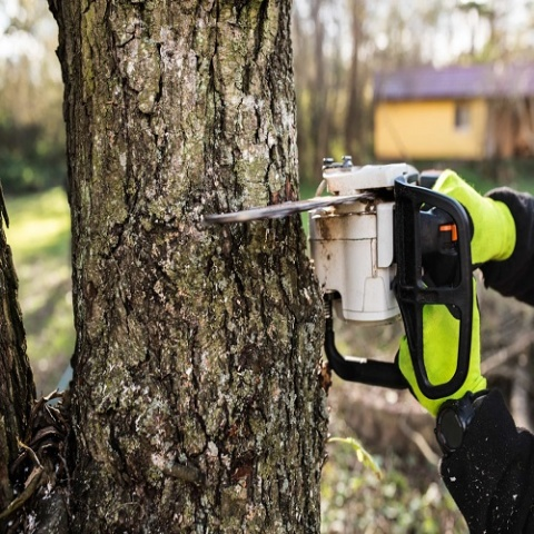 Chesterfield Tree Service